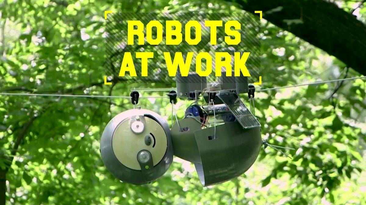 Robots At Work: SlothBot monitors endangered species