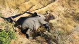 Elefantensterben beunruhigt Experten