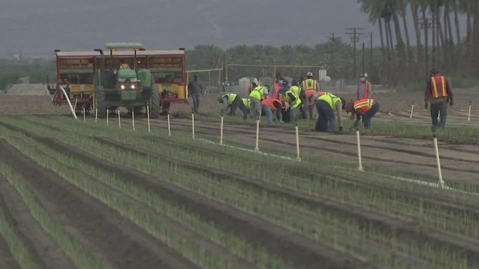 CA's farmworkers risk COVID-19 to eat