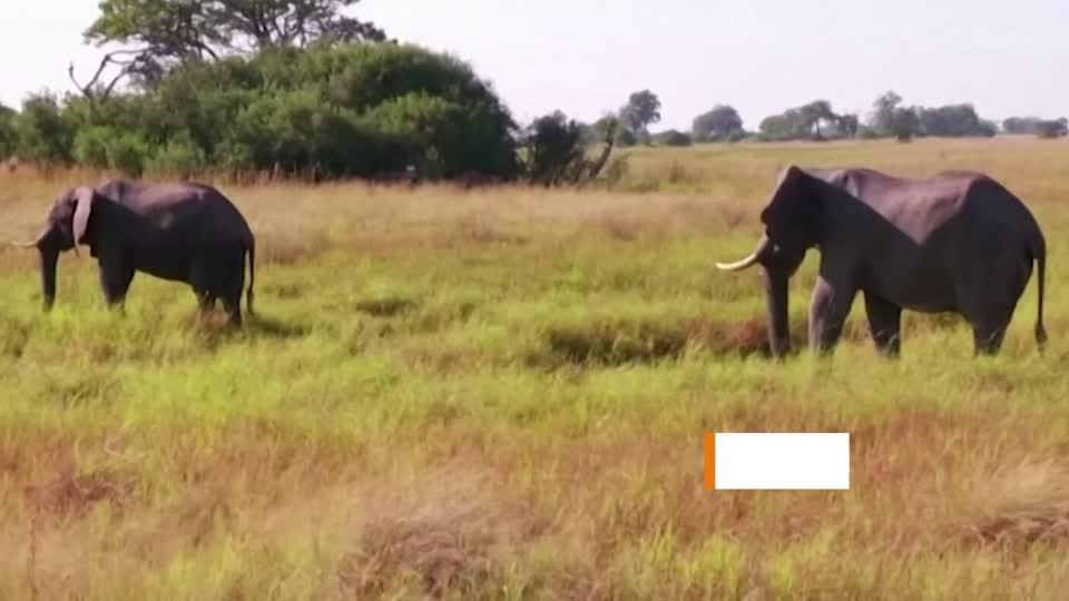 Natural toxin may explain elephant mystery deaths
