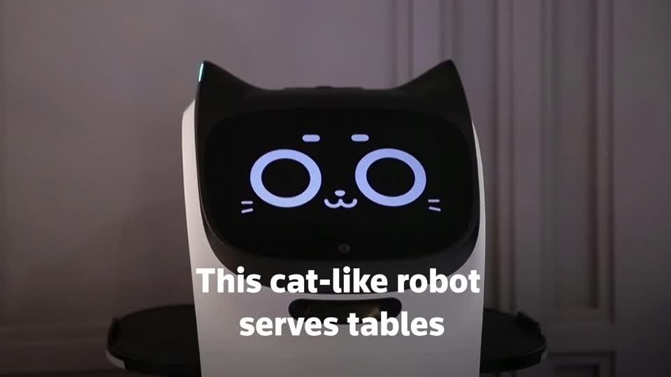 A cat-like robot serves in a Russian cafe