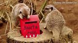 動物たちもサンタにお願い、クリスマスまであと少し 英ロンドン(字幕・1日)