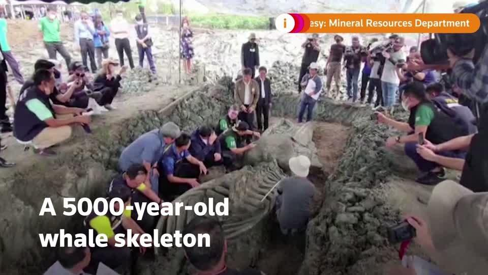 5000-year-old whale skeleton unearthed in Thailand