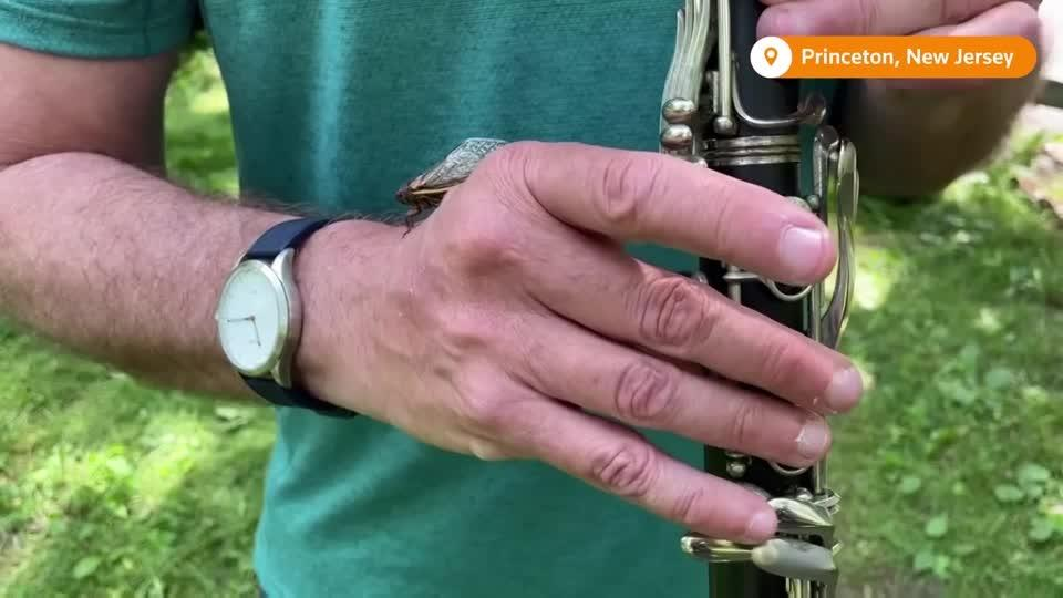 'Some people think I'm crazy': Musician composes cicada jazz