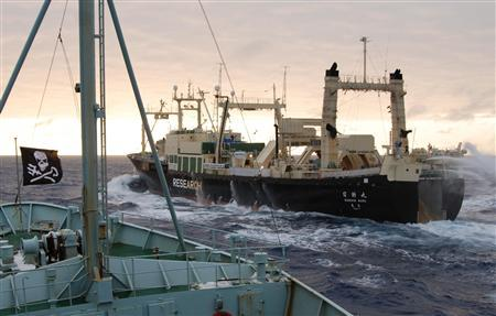 Japanese whaling ship the Nisshin Maru is seen being shadowed in the Southern Ocean by protest ship Robert Hunter in this February 8, 2007 handout file picture from the Sea Shepherd Conservation Society. New Zealand maritime authorities said February 15, 2007 that the 8,000 tonne Nisshin Maru, flagship of the Japanese whaling fleet, is on fire and one crew member is missing off the coast of Antartica after a blaze broke out below decks. REUTERS/Sea Shepherd Conservation Society/Handout