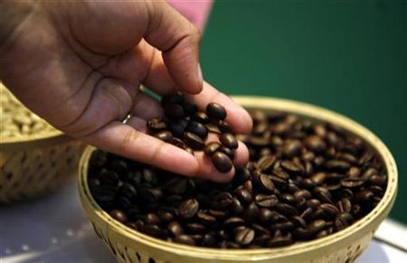 A visitor checks coffee beans at the 'International Coffee Festival 2007' in the southern Indian city of Bangalore, in this February 24, 2007 file photo. Kopi Luwak, made in neighboring Indonesia from coffee beans excreted by native civet cats, is reputedly the world's rarest and most expensive coffee, painstakingly extracted by hand from the animals' forest droppings. REUTERS/Jagadeesh