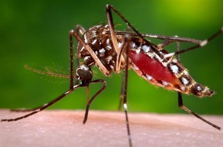 Genetic map completed for mass-killer mosquito