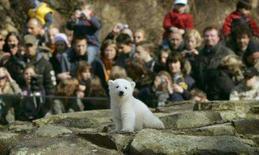 <p>Knut, o urso polar alemão que virou celebridade, pode estrelar um filme de Hollywood que renderia centenas de milhares de dólares para o zoológico de Berlim, informou o próprio zoológico nesta quinta-feira. Photo by Arnd Wiegmann</p>