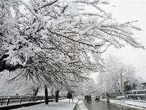 <p>Vehicles move under snow-covered trees after season's first heavy snowfall in Srinagar February 6, 2008. In a sure sign that separatist violence is waning in Kashmir, Bollywood actors are once again being spotted singing, dancing and coyly flirting in the region's idyllic Himalayan countryside. REUTERS/Fayaz Kabli</p>