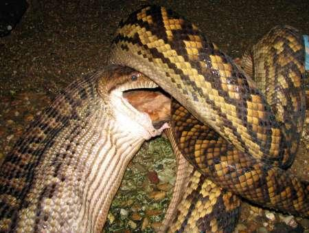 Pet Owners Panic After African Python Kills 2 Canadian Children