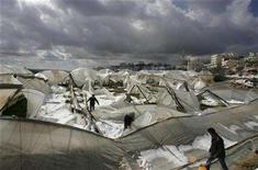 <p>Palestinians walk amongst greenhouses damaged by a snowstorm in the West Bank city of Hebron, February 2, 2008. REUTERS/Nayef Hashlamoun</p>