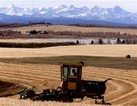 <p>A local farmer cuts an oat crop north of Cochrane, Alberta in an undated photo. REUTERS/Patrick Price</p>