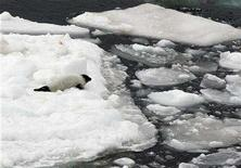 <p>A harp seal pup sits on an ice pan in the Gulf of St. Lawrence March 23, 2007. REUTERS/Paul Darrow</p>