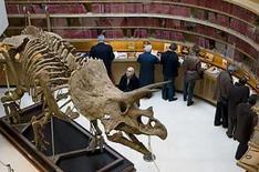 <p>Un visitante observa el esqueleto de triceratops en la casa de subasta Christie's en Paris, 14 abril 2008. El esqueleto de un dinosaurio triceratops que vivió hace unos 65 millones de años será subastado el miércoles en París como parte de una colección de huesos y fósiles prehistóricos, informó Christie's. El esqueleto de 7,5 metros es el primer espécimen de este tipo que entra en remate desde que el de un tiranosaurio Rex, apodado Sue, fue vendido en Nueva York hace mas de una década, en 1997, dijo Christie's. Photo by Philippe Wojazer/Reuters</p>