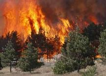 <p>Incêndio consome árvores perto de Gori, na Geórgia, em 10 de agosto de 2008. A Casa Branca avisou a Rússia no domingo que a escalada da ação militar no conflito da Geórgia poderia causar um 'impacto significativo de longo prazo' nas relações entre Washington e Moscou. Photo by Gleb Garanich</p>