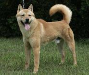 <p>Un cane. REUTERS/Jo Yong-Hak (SOUTH KOREA)</p>