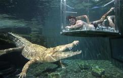 """<p>La """"gabbia della morte"""", nuova attrazione turistica australiana. REUTERS/Wade Huffman (AUSTRALIA).</p>"""