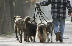 <p>Sept chiens et un chat en surpoids vont suivre un régime et un programme d'exercices physiques pendant 100 jours, pour tenter de décrocher le titre d'animal domestique le plus en forme de l'année en Grande-Bretagne. /Photo d'archives/REUTERS/Arnd Wiegmann</p>