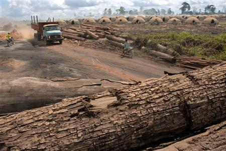 Logs cut from virgin Amazon rainforest lie ready to be fed into one of the nearly 1,200 ovens used to make charcoal for use in iron smelters and for home use, just outside the town of Ulianopolis in Para state July 5, 2007. REUTERS/Paulo Santos