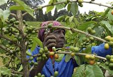 <p>A farmer prunes coffee bushes at a family plantation in Kiambu district in this May 28, 2008 file photo. This year, agricultural experts have renewed calls for policy makers to pay more attention to small-scale women farmers, who grow up to 80 percent of crops for food consumption in Africa. After decades in the political wilderness, farming became a hot topic this year when international food prices hit record highs in June, sharply boosting hunger around the world. REUTERS/Noor Khamis/Files</p>