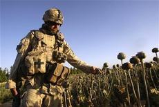 <p>Un soldato canadese in un campo di papaveri nell'Afghanistan meridionale. REUTERS/Peter Andrews</p>