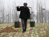 <p>A farmer carries buckets of water to his drought-affected crops in a field near the village of Zhudong in Hongchang County, Henan province February 15, 2009. REUTERS/David Gray</p>
