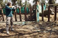 <p>Ramat Gan Safari veterinarian Igal Horowitz administers an anaesthetic shot to Lieber, a five-year-old hippopotamus, at the safari park near Tel Aviv May 6, 2009. REUTERS/Gil Cohen Magen</p>