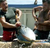 <p>Pescatori siciliani durante la mattanza del tonno pinnablu. REUTERS/Tony Gentile PP03060031 TG/SN</p>