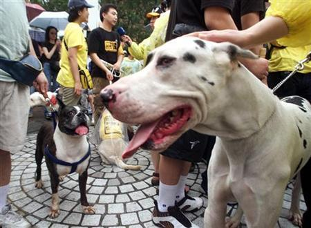 Dog breeders bring a Great Dane (R) and a Boxer to a demonstration against a new law requiring muzzles for large felines in public places during a protest in front of Taipei's Agriculture Council on May 19, 2001. REUTERS/Simon Kwong