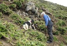<p>Dog trainer Steve Austin checks a rabbit burrow that his dogs have indicated contained a rabbit at Hasselborough Bay on Macquarie Island in this handout picture taken October 17, 2009. AREUTERS/Tasmania Parks and Wildlife Service/Handout</p>
