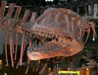 <p>Fossile di dinosauro in immagine d'archivio. REUTERS/Kimimasa Mayama</p>