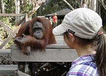 <p>A tourist looks at an orang utan at Camp Leakey in the Tanjung Puting National Park in Kalimantan October 15, 2009. Indonesia has been criticised for rampant deforestation for palm oil, timber and other development, leading to rising greenhouse gas emissions and loss of habitat for wildlife. But eco-tourism is becoming a buzzword in Indonesia, with many hotels and tour operators touting their sustainable bent in a bid to attract a share of a growing global market. REUTERS/Eco Lodges</p>