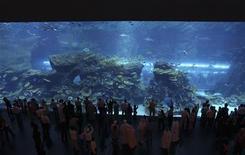 <p>L'acquario del Dubai Mall in foto d'archivio. REUTERS/Ahmed Jadallah/Files</p>