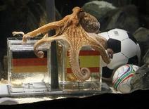 <p>Paul le poulpe a porté un coup au coeur des supporters allemands en prédisant une victoire de l'Espagne face à l'Allemagne en demi-finale de la Coupe du monde, mercredi à Durban./Photo prise le 6 juillet 2010/ REUTERS/Wolfgang Rattay</p>