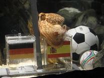 """<p>Осьминог-провидец Пауль """"предсказывает"""" победу Испании в полуфинале чемпионата мира против Германии в аквариуме Sea Life в немецком Оберхаузене 6 июля 2010 года. Гроза тотализаторов осьминог-провидец Пауль, пока не допустивший ни одной ошибки в прогнозах на матчи чемпионата мира в ЮАР, отдал предпочтение Испании в полуфинальном поединке против немцев. REUTERS/Wolfgang Rattay</p>"""
