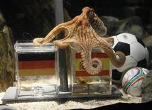 """<p>O polvo Paul, conhecido como """"polvo oráculo"""", fazendo previsão antes do jogo entre Alemanha e Espanha. Alguns alemães estão querendo fritar o polvo que acertou a previsão das seis partidas de sua seleção na Copa do Mundo -- inclusive a derrota para a Espanha na semifinal de quarta-feira. 06/07/2010 REUTERS/Wolfgang Rattay</p>"""