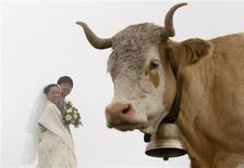 <p>Japanese bridal couple Arisa Chi (L) and her new husband Kenji Yoshida stand behind a cow after their wedding ceremony on the foggy Mount First (2168m/7113ft) in the Swiss Alpine resort of Grindelwald August 6, 2010. REUTERS/Arnd Wiegmann</p>