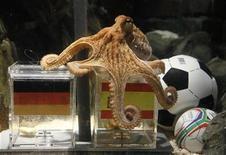 <p>Foto de archivo del pulpo Paul en su acuario en Oberhausen, Alemania, jul 6 2010. El pulpo Paul se convirtió en un embajador de la candidatura de Inglaterra para albergar el Mundial de fútbol 2018, dijeron el viernes funcionarios. REUTERS/Wolfgang Rattay</p>