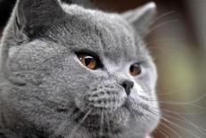 <p>Кошка на международной выставке кошек в Любляне 14 февраля 2010 года. Полиция взяла под охрану дом женщины, запихнувшей кошку в мусорный контейнер, после того, как ее действия вызвали волну возмущения со стороны защитников животных и даже угрозы в ее адрес. REUTERS/Srdjan Zivulovic</p>