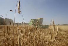 <p>Комбайн собирает рожь на ферме в Мирном 23 июля 2010 года. Рекордная засуха в черноморском регионе, значительно сократившая сбор зерна у основных производителей - России и Украины, может снизить урожай зерновых и в 2011 году из-за сокращения посевов озимых, прогнозируют аналитики. REUTERS/Denis Sinyakov</p>