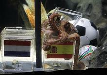 <p>Paul le poulpe, devenu en Allemagne la star de la Coupe du monde 2010 de football pour la qualité de ses prédictions des matches de l'équipe nationale, est décédé à Oberhausen. Le céphalopode le plus célèbre des fans de ballon rond avait prédit les résultats de sept rencontres de la Mannschaft, de même que celui de la finale Espagne-Pays-Bas (photo). /Photo prise le 9 juillet 2010/REUTERS/Wolfgang Rattay</p>