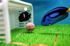 "<p>Pallet surgeon fish, symbolising Japan's national soccer team's ""Blue Samurai"", swim around a ball beside a goal at the Sea Paradise aquarium in Hakkeijima, west of Tokyo June 8, 2006. REUTERS/Toshiyuki Aizawa</p>"