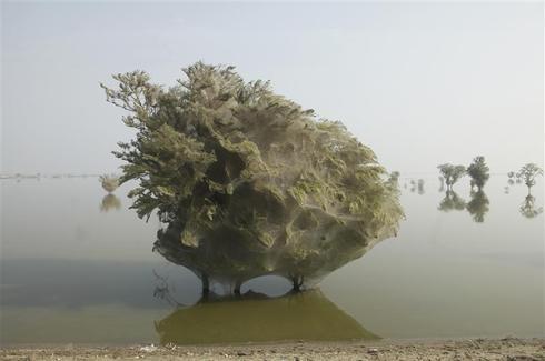 Environment watch