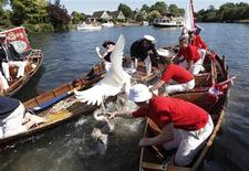 <p>A swan is caught by the Queen's Swan Uppers during the annual Swan Upping ceremony on the River Thames between Shepperton and Windsor in southern England July 19, 2010. REUTERS/Luke MacGregor</p>