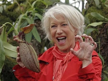 British actress Helen Mirren poses for a photograph with the Nepenthes 'Helen', a carnivorous plant named after her, on press day at the Chelsea Flower Show 2011 in London May 23, 2011. REUTERS/Luke MacGregor