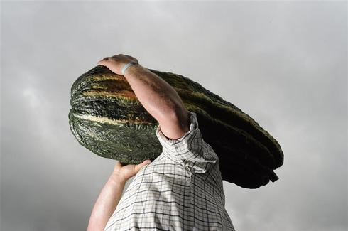 Giant vegetable contest