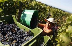 <p>A worker collects grapes for wine during harvest at a vineyard of the Tenuta dell'Ornellaia estate in the village of Castagneto Carducci in Tuscany September 21, 2011. REUTERS/Tony Gentile</p>