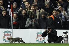 <p>Le chat qui s'est introduit lundi soir pendant trois minutes sur la pelouse d'Anfield lors du match de Premier League Liverpool-Tottenham est devenu une célébrité sur internet. /Photo prise le 6 février 2012/REUTERS/Phil Noble</p>