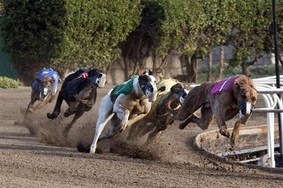 The Greyhound express