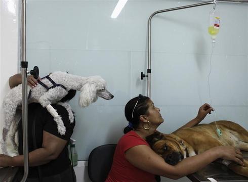 Sick pets, free care